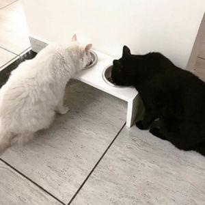 Comprar comedouro para Gatos Slim