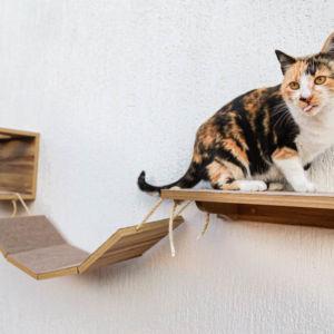 Comprar Playground para Gato Angora