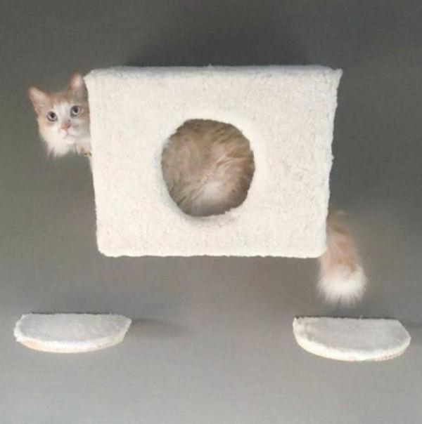 Comprar Playground para Gato Nuvens